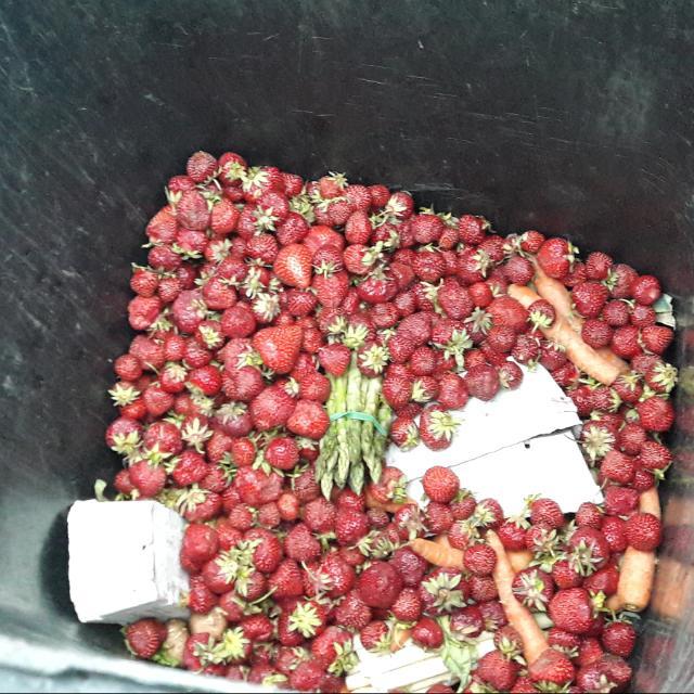 Mülltonne zur Erdbeersaison